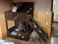 "Double decker dog bed | In The ""DOG HOUSE"" 