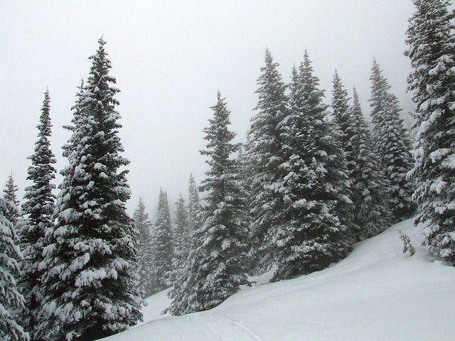 3d 4k Fbb Wallpaper Snow Covered Pine Trees Favorite Things Pinterest