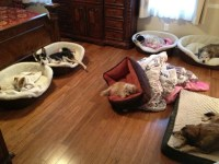 No chew dog bed | Great Ideas | Pinterest