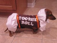 Tootsie Roll Dog Costume   Halloween   Pinterest