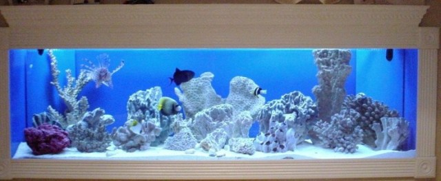 150 Gallon FOWLR In Wall Saltwater Tank | Aquarium Stuff | Pinterest