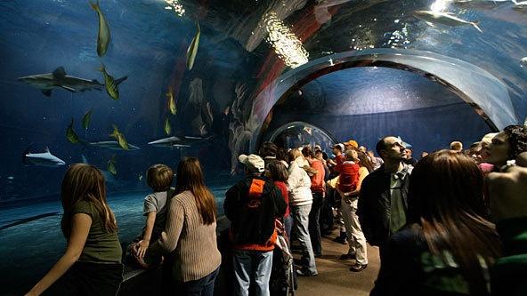 Tulsa Aquarium | T Town | Pinterest