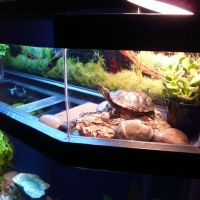 turtle with fish aquarium - Small Turtle Aquarium