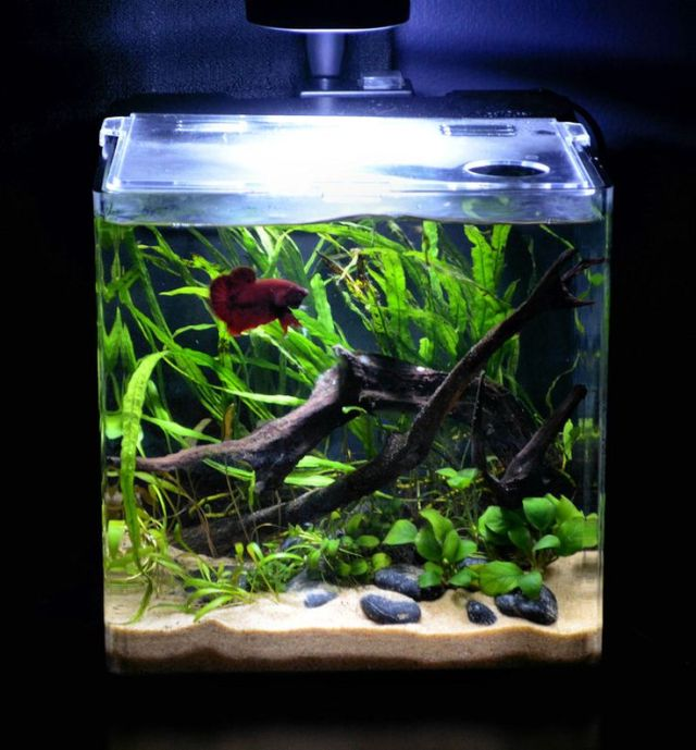 very nice planted betta tank!   Aquascaping   Pinterest
