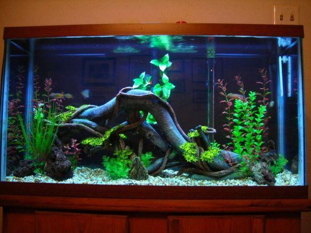 fish tank ideas | Fish Tank Setup   Perth WRX.com