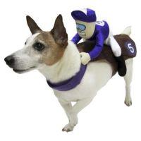Jockey Rider Pet Costume | Cool stuff for pets! | Pinterest