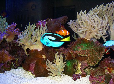 Salt Water, 75 Gal. Fish Coral Reef) Aquarium maintenance & marine