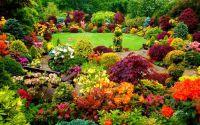 Flower Garden In Stunning Fall Colors!   Flowers/Yard ...