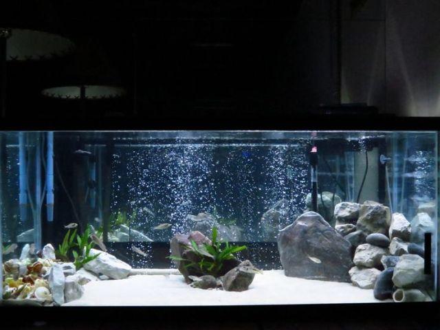 75 gallon Tanganyikan cichlid aquarium fish tank #trustefish | Fish