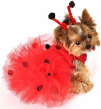 puppy costume ladybug | dog costumes | Pinterest