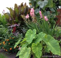Tropical Garden Borders | tropical landscaping ideas ...
