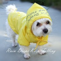 Dog raincoats for safety | dog  supplies | Pinterest