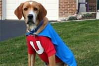 Underdog Costume For Dogs