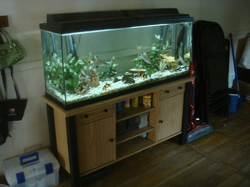 Fish aquarium 50 gallon uniquarium 50 60 gallon quadra for 50 gallon fish tank