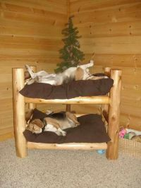 Homemade doggie bunk beds | Pet Beds | Pinterest
