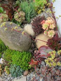 succulent rock garden | succulents | Pinterest