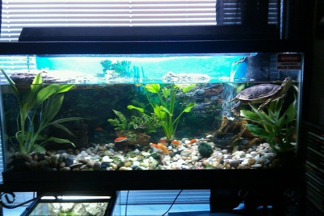 Or this turtle tank setup?   Ideas for Our Home   Pinterest