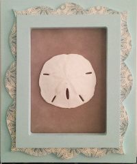 Framed Sand Dollar Wall Art