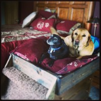 Homemade dog bed! | Dog shelters and beds | Pinterest