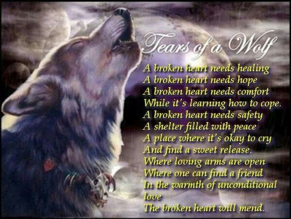 Lone Wolf Wallpaper Quote Quotes About Crying Wolf Quotesgram
