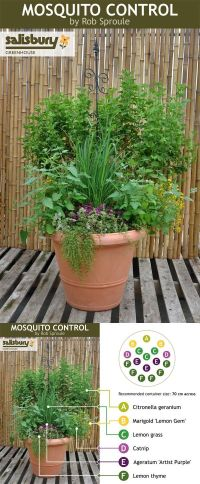Mosquito repelling pot for the patio | The Small Things ...