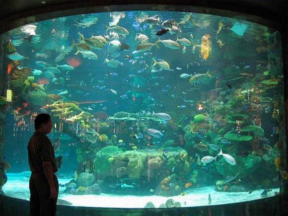 underwater aquarium Las Vegas | Cool aquariums | Pinterest