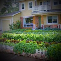 Edible front yard | Garden | Pinterest