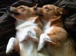 Animals That Cuddle