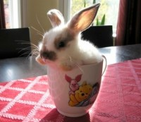 Bunny in a teacup | Cute things in teacups | Pinterest