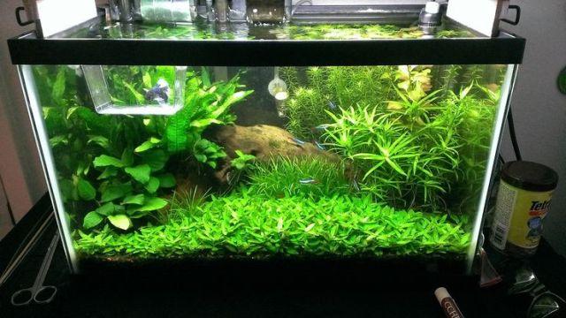 20 Gallon Fish Tank Decoration Ideas 2017 Fish Tank
