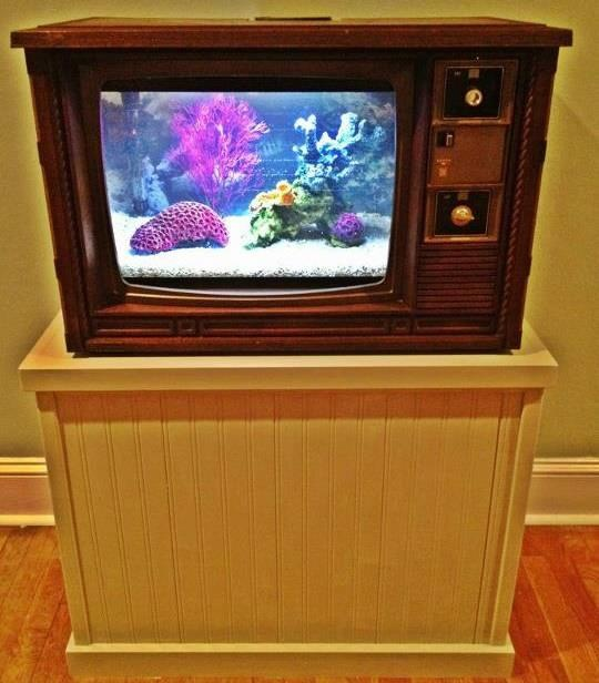 Cool Fish Tank TV! | Cool fish tanks | Pinterest