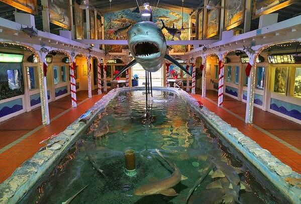 Key West Aquarium | Key West | Pinterest
