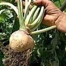 Start A Vegetable Garden Gardening Tips And Advice