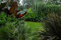tropical border | Garden | Pinterest