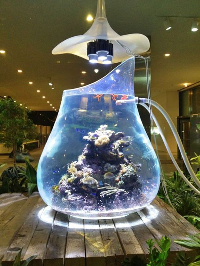 Cool fish tank best freshwater aquarium fish 2017 fish for Fish tank house