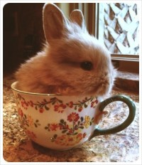 Tea Cup Bunny | Bunnies I ~ Complete | Pinterest