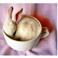 Bunny in teacup found on #instagram | Animals. | Pinterest