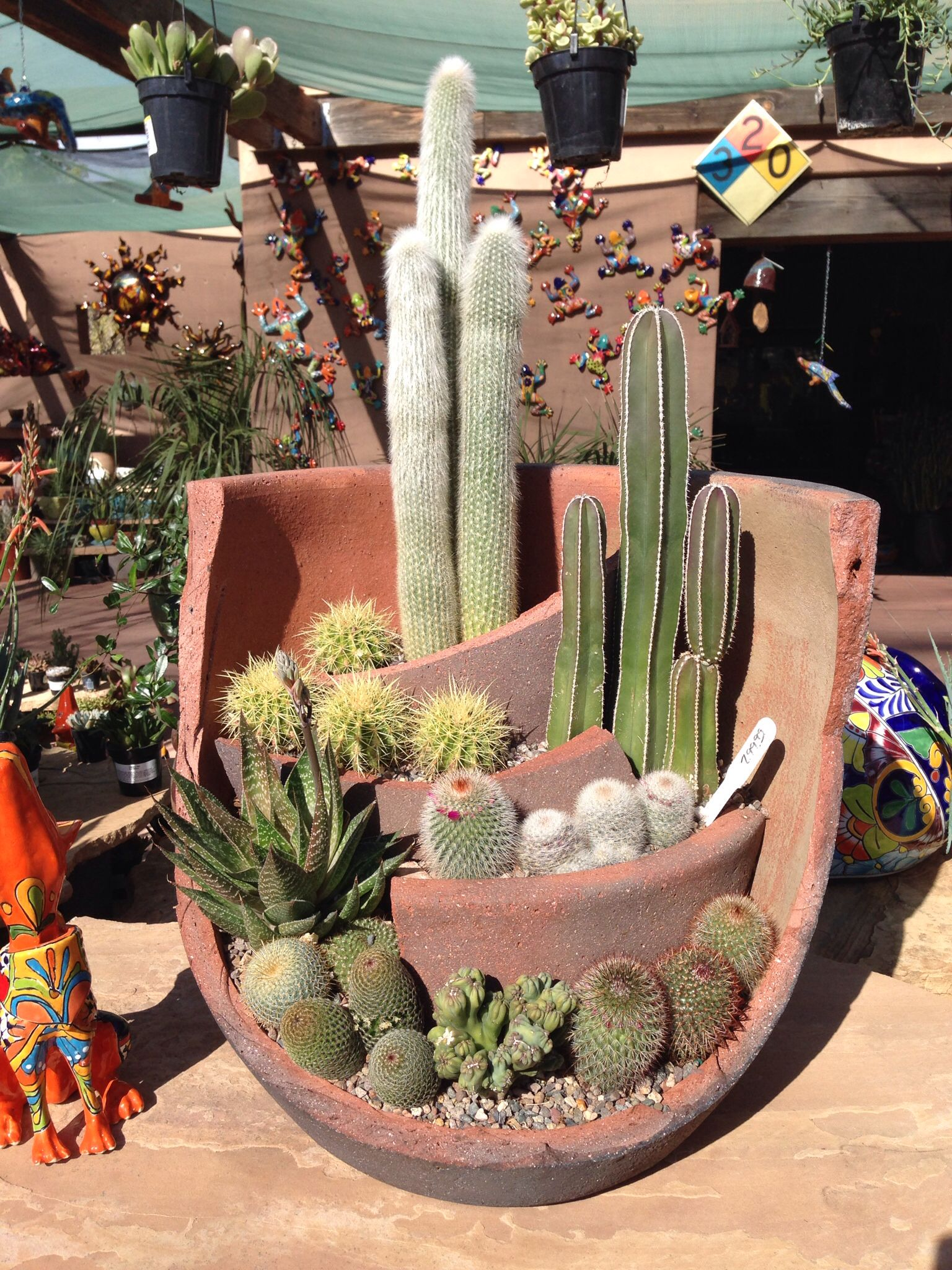 Cactus Planters Pottery Pin By Japd On Cacti Sedums And Succulents Pinterest
