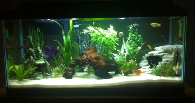 My 30 gallon long freshwater aquarium | Aquarium Ideas / Freshwater F