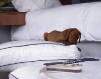 Westin Heavenly Dog Bed | The Westin Beach Resort & Spa ...