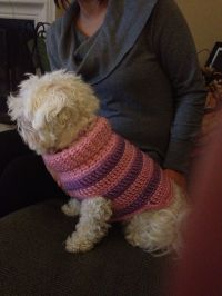 Small dog sweater | KNIT & CROCHET | Pinterest