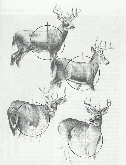 deer hunting deer kill zone diagram