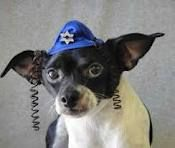 My Morkie on Pinterest | Maltese, Maltese Puppies and ...