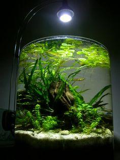 Aquariums on Pinterest   Aquascaping, Aquarium and Fish Tanks