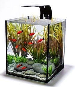 Desktop Aquariums | Aquarium Ideas | Pinterest