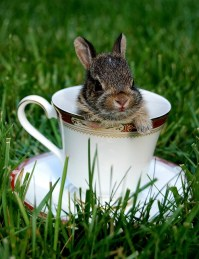 Bunny in teacup. #teacup #bunny #cute | Things that make ...
