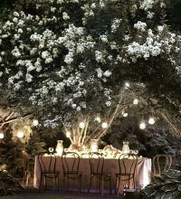 Moon gardens - Night time dining | Moon party | Pinterest