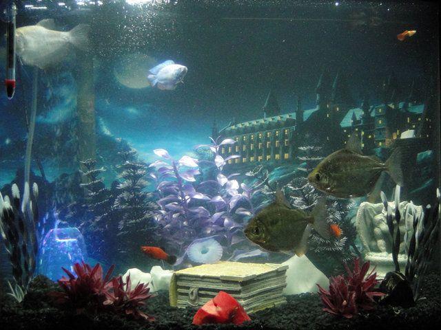 Harry Potter Fish Tank Decorations My harry potter fish aquarium