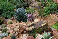 Rock garden with succulents in bay area | Gardening ...