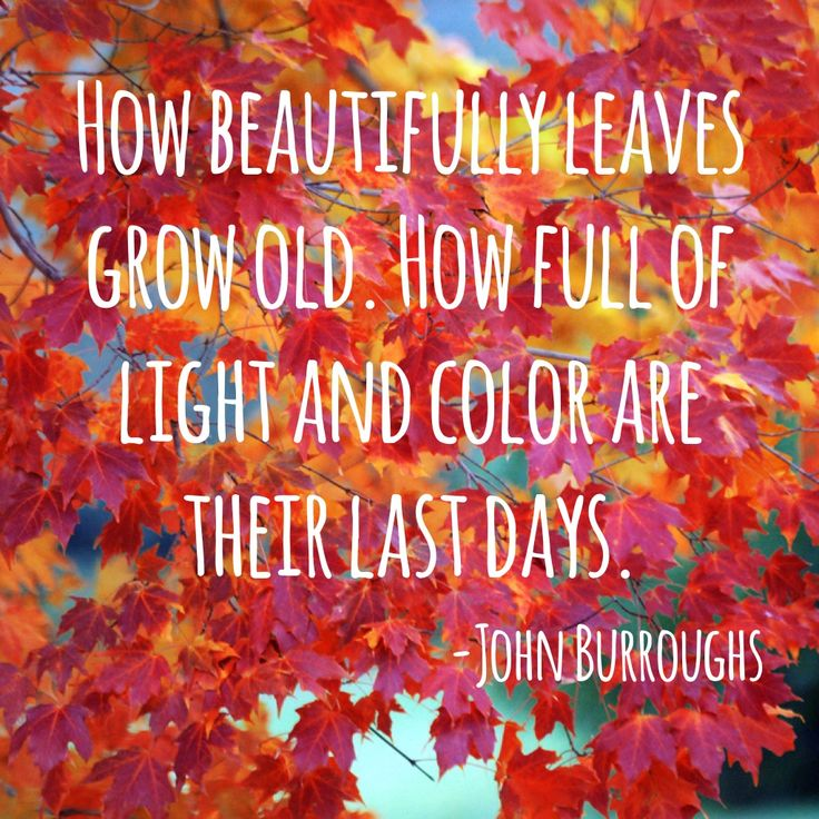 Change Is Coming Quotes Wallpaper Leaves Changing Color Quotes Quotesgram